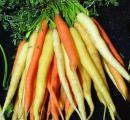 طب سنتی,شبنم همدان,هویج ایرانی,زردک,shabnamha.ir,تقویت قوای جسمی,afkl ih