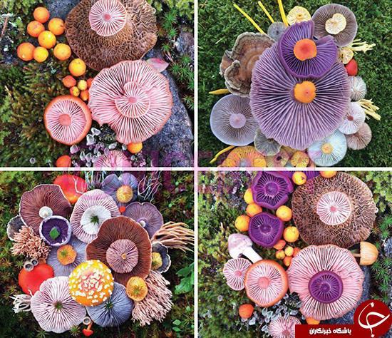 هنرنمایی,قارچ رنگی,هنرنمایی با قارچ,shabnamha.ir,شبنم همدان,afkl ih,شبنم ها