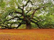 این درختان واقعی هستند
