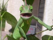 حیوانات,خنده دار,تعجب/خنده دارترین و خنگ ترین چهره از حیوانات در حال تعجب!