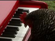 شبنم ها, shabnamha, مرغ نوازنده, پیانو , afkl ih, shabnamha.ir