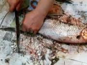ماهی,پاک کردن ماهی,سیخ چوبی,shabnamha.ir,شبنم همدان,afkl ih,شبنم ها;